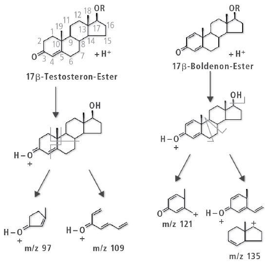 Steroide-in-Arzneimitteln_04