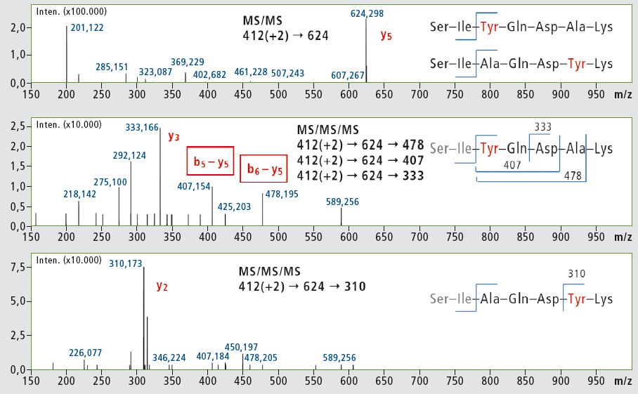 msn-Analyse-Peptide04