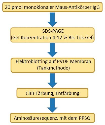 PPSQ_Aminosäuresequenzierung