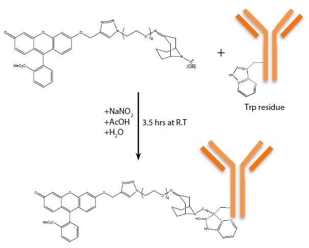 modifizierte-Antikörper_01