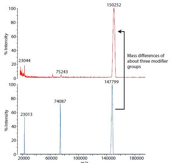 modifizierte-Antikörper_02
