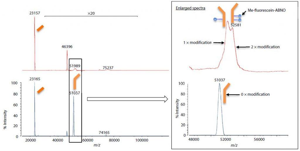 modifizierte-Antikörper_03